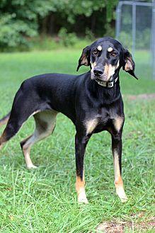 Hound (Unknown Type) Mix Dog for adoption in Waldorf, Maryland - Addie (Maddie)