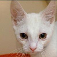 Adopt A Pet :: Yeti Jr - Fairport, NY