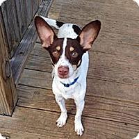 Adopt A Pet :: Radar - Woodlawn, TN
