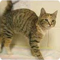 Adopt A Pet :: Pia - Arlington, VA
