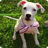 Adopt A Pet :: Belle - Geismar, LA