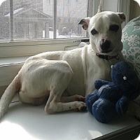 Adopt A Pet :: Freckles - Hamilton, ON