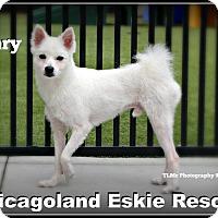 Adopt A Pet :: Henry - Elmhurst, IL