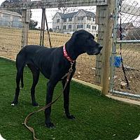 Adopt A Pet :: Oreo - Baden, PA