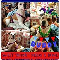 Adopt A Pet :: Buddy - North Brunswick, NJ