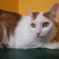 Adopt A Pet :: Kit - Williamsport, PA