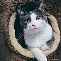 Adopt A Pet :: Fred - Chino Hills, CA