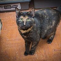 Adopt A Pet :: Jasmine - Corinne, UT