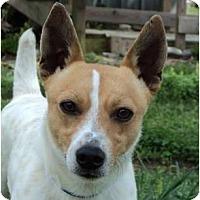 Adopt A Pet :: RASCAL ID 537 - Parsons, TN