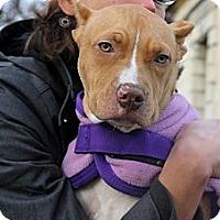 Adopt A Pet :: Angel - Reisterstown, MD