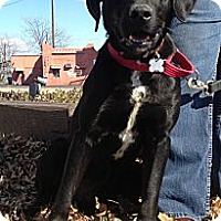 Adopt A Pet :: Bryce - Richmond, VA