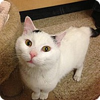 Adopt A Pet :: Casspurr - Monroe, GA