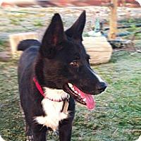 Adopt A Pet :: Stormy - VIDEO - Monrovia, CA