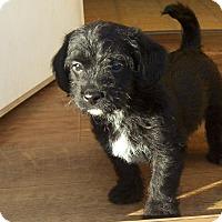 Adopt A Pet :: Lancelot - Greenville, RI