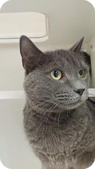 Domestic Shorthair Cat for adoption in Reisterstown, Maryland - Mya