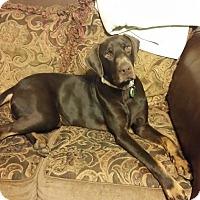 Adopt A Pet :: Bandit - Fort Worth, TX