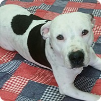 Adopt A Pet :: Princessa - Pottsville, PA