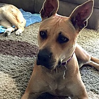 German Shepherd Dog Mix Dog for adoption in Long Beach, California - Nina