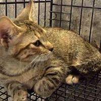 Adopt A Pet :: AA-Laken - Tyler, TX