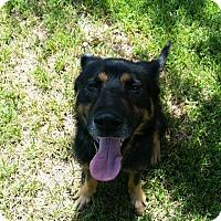 Adopt A Pet :: Rocky - West Hartford, CT