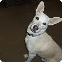 Adopt A Pet :: Sadie - Medford, WI