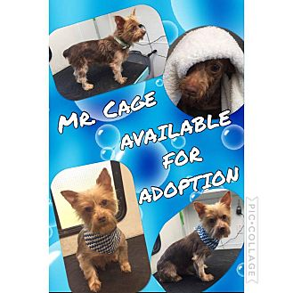 Terrier (Unknown Type, Small) Mix Dog for adoption in Mobile, Alabama - Cage