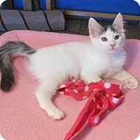Adopt A Pet :: Jessica - Glendale, AZ
