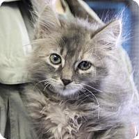 Adopt A Pet :: Meadow - Plano, TX