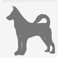 Doberman Pinscher Mix Dog for adoption in Barrington, Illinois - Luke