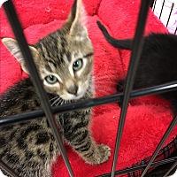 Adopt A Pet :: Rosie - Simpsonville, SC