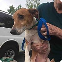 Adopt A Pet :: Romeo - Loudonville, NY