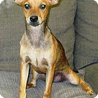 Adopt A Pet :: Fawnda - Eastpoint, FL