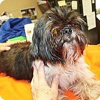 Adopt A Pet :: Kewpie - Sparta, NJ