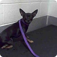 Adopt A Pet :: TRIDENT - Albuquerque, NM
