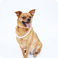 Adopt A Pet :: Peewee Noneck MGee - Los Angeles, CA