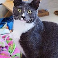 Adopt A Pet :: Dylan - Philadelphia, PA