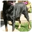 Photo 2 - Rottweiler/Labrador Retriever Mix Dog for adoption in Berkeley, California - Roxy