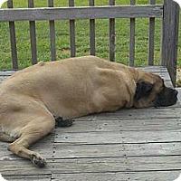Adopt A Pet :: Rocko - Ellicot City, MD