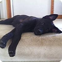 Adopt A Pet :: Butch - batlett, IL