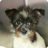 Adopt A Pet :: Aubree - Canoga Park, CA