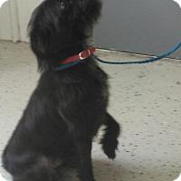Adopt A Pet :: Damien - Clarksville, TN