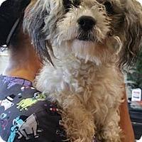Adopt A Pet :: Niko - Poway, CA
