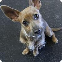 Adopt A Pet :: Geri - Rockwall, TX