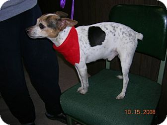 Jack Russell Terrier Dog for adoption in Winfield, Pennsylvania - Bubba
