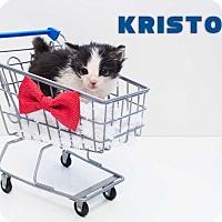 Adopt A Pet :: Kristoff - San Angelo, TX