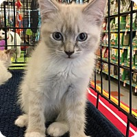 Adopt A Pet :: LACEY - Lakewood, CA
