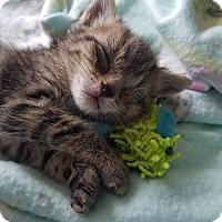Adopt A Pet :: Thing1 - RM - Orlando, FL