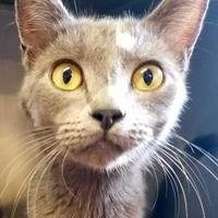 Adopt A Pet :: Janie - Brownwood, TX