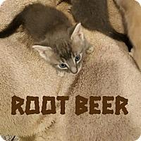 Adopt A Pet :: Angel K3 aka Root Beer - raytown, MO