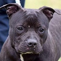 Adopt A Pet :: MARTY - New Haven, CT